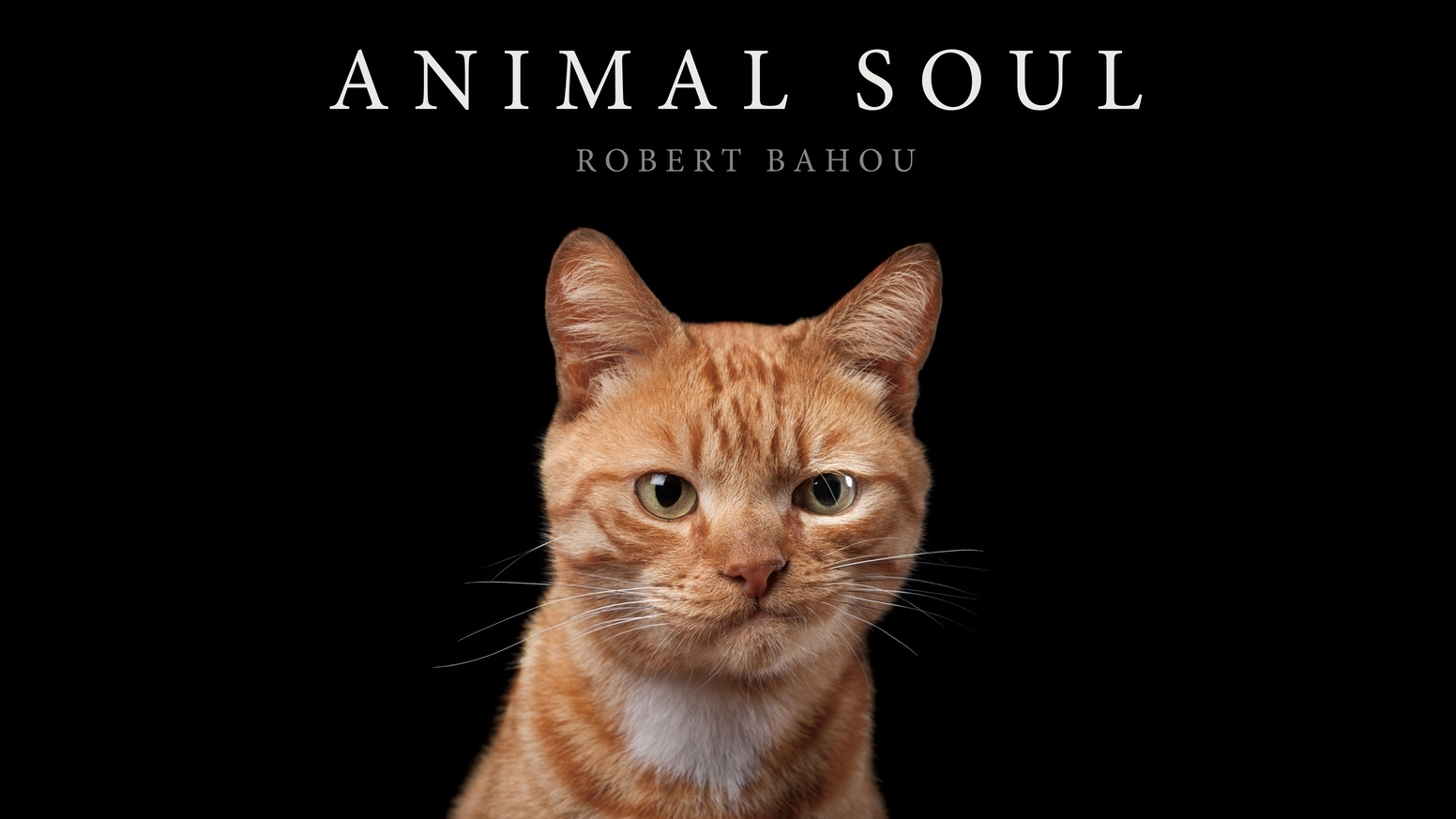 AnimalSoul.jpg