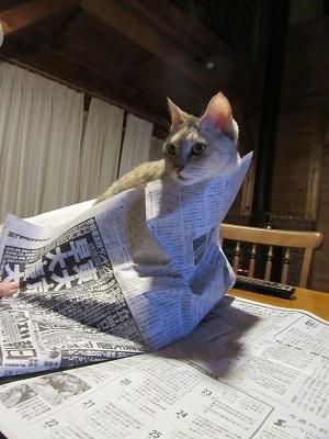 新聞読めない!