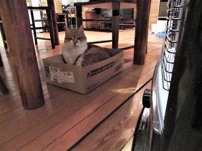 箱のあるところサスケあり
