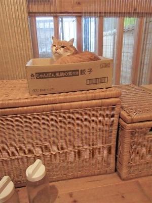 箱ごと置いてみた