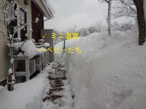 DSC07439sd.jpg