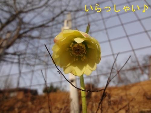 DSC08134sd.jpg