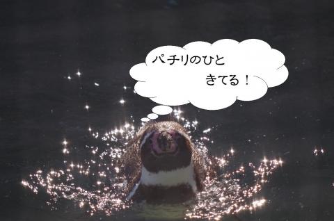福岡市動物園のペンギン