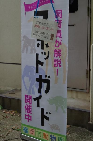 福岡市動物園 マレーバク スポットガイド