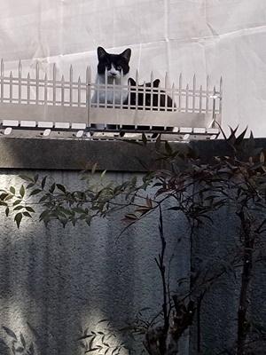 tanakataka猫対策忍び返し1702
