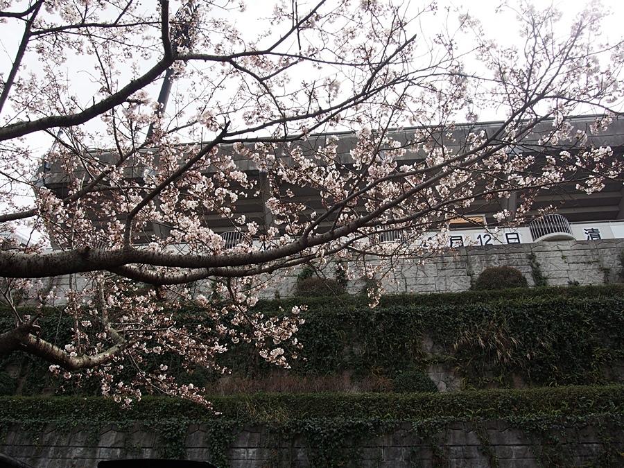 aisuta-20170402-03.jpg