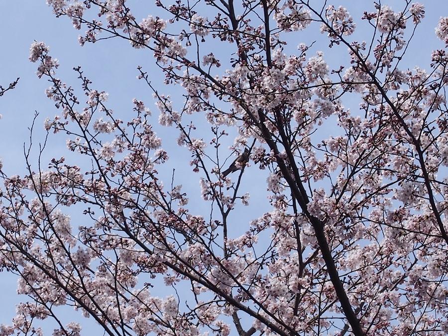 aisuta-20170402-10.jpg
