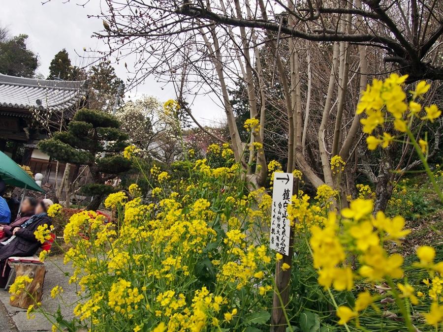 mokuren-20170312-15.jpg