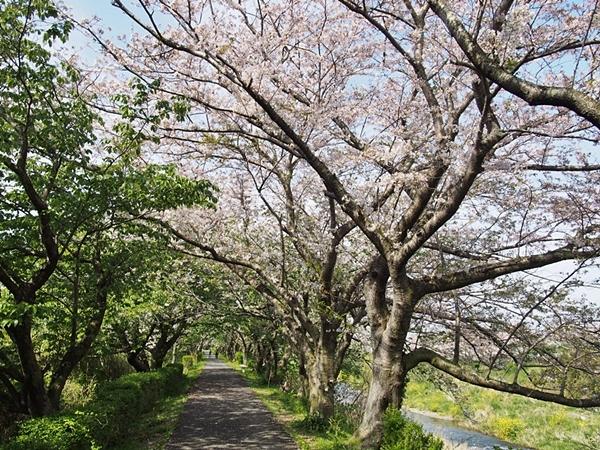 nakagawa-20170416-04s.jpg