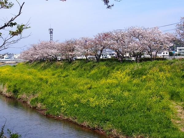 nakagawa-20170416-09s.jpg