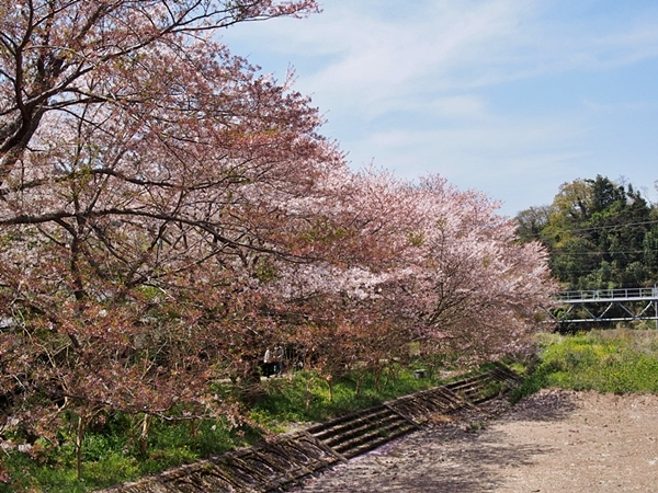 nakagawa-20170416-35s.jpg