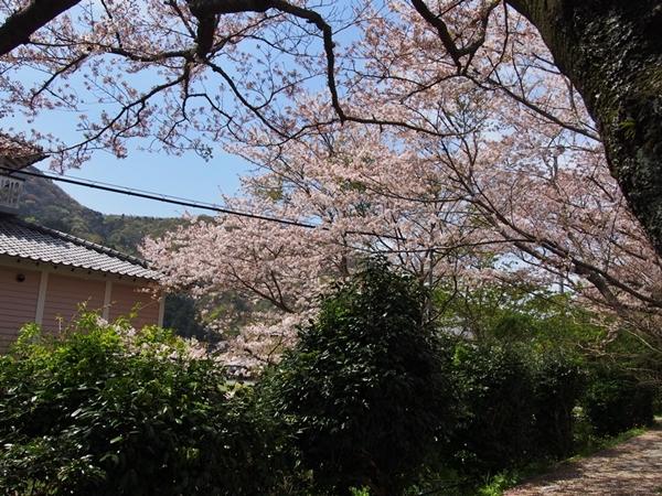 nakagawa-20170416-37s.jpg