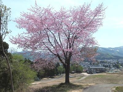 uonuma-street620.jpg