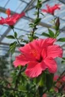 BL170402鶴見緑地の花1-3IMG_3732