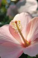 BL170402鶴見緑地の花1-9IMG_3740