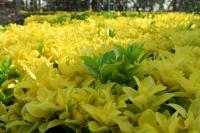 BL170402鶴見緑地の花2-7IMG_3798