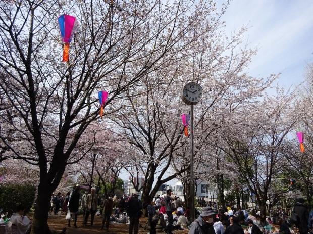 桜@飛鳥山公園 (4)