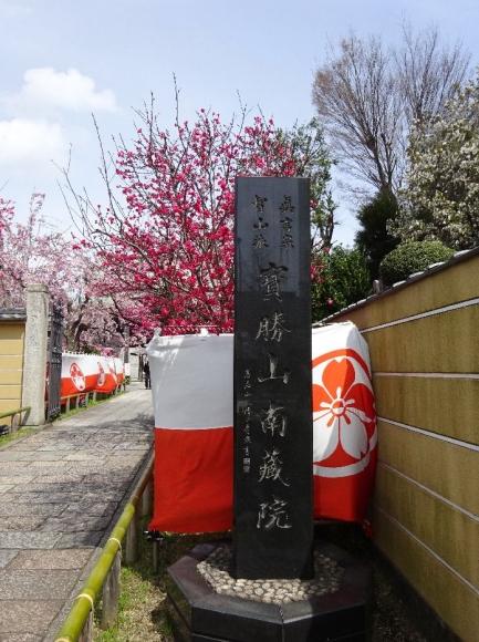 桜@南蔵院4-6 (2)