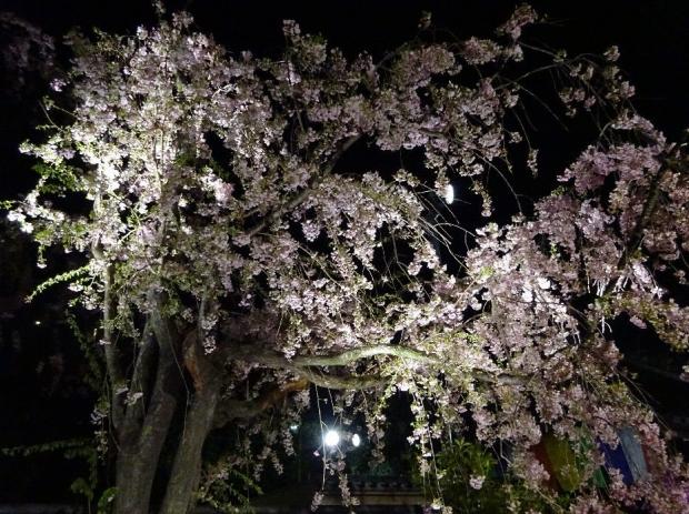 夜桜@南蔵院4-7 (5)