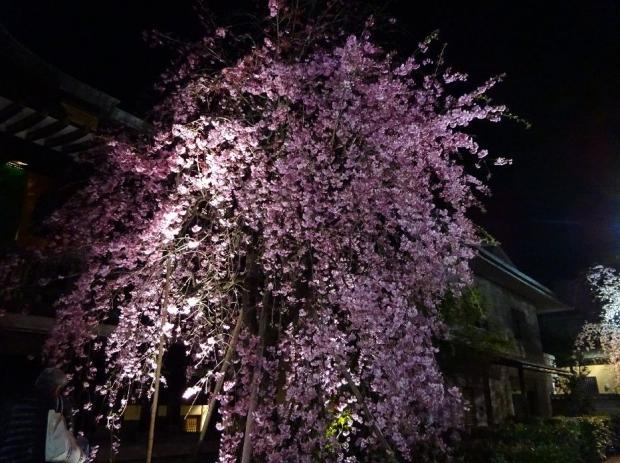 夜桜@南蔵院4-7 (12)
