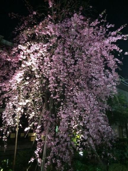 夜桜@南蔵院4-7 (28)