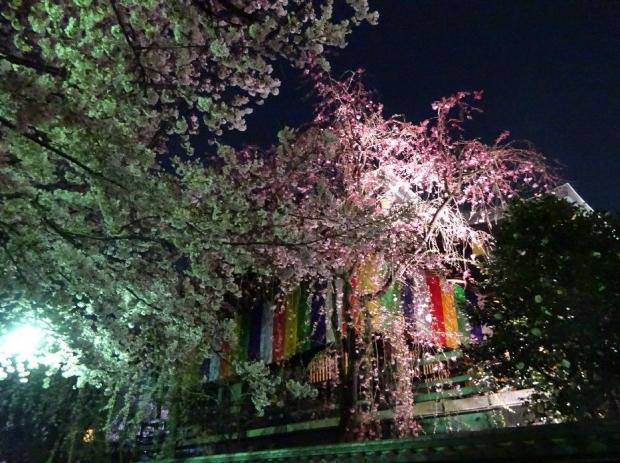 夜桜@南蔵院4-7 (1)