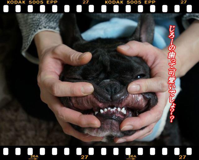 じろーの歯