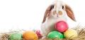 Easter Image アロマスクール マッサージスクール オーストラリア