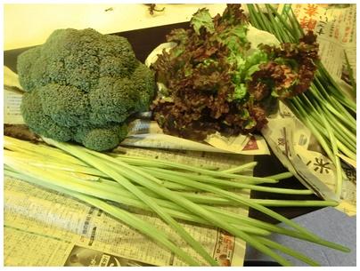 旬の野菜1