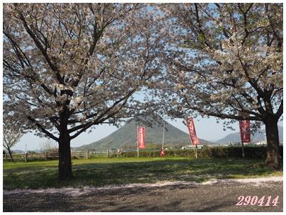 サンビレ桜414-2