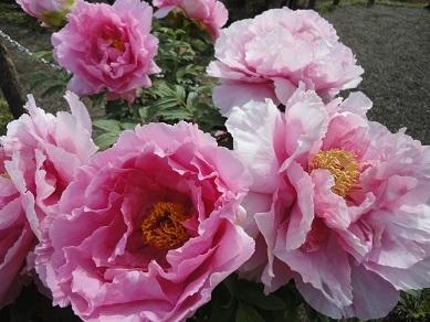 5月の花5