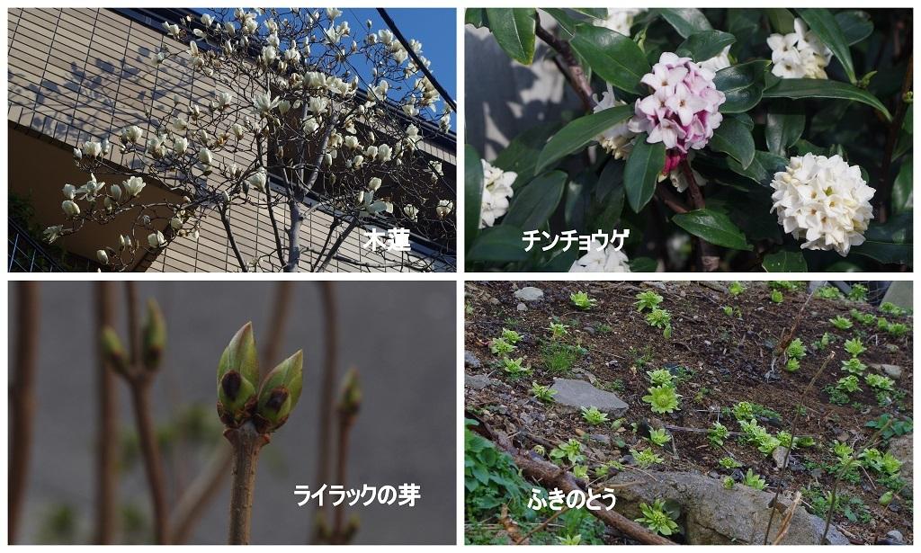2017-03-05.jpg