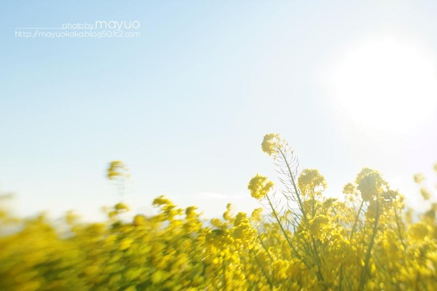 photo by mayuo