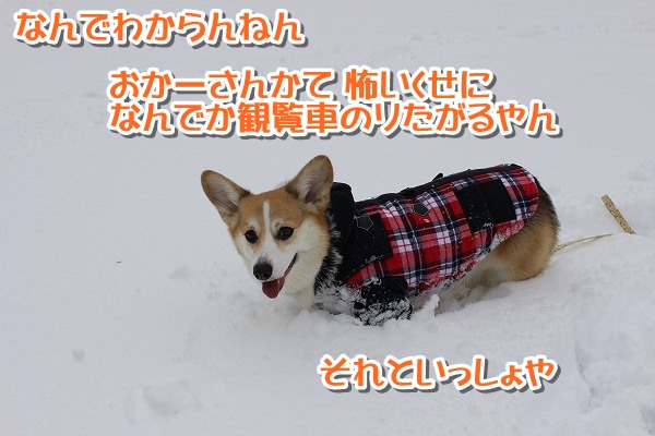 IMG_0135-0.jpg