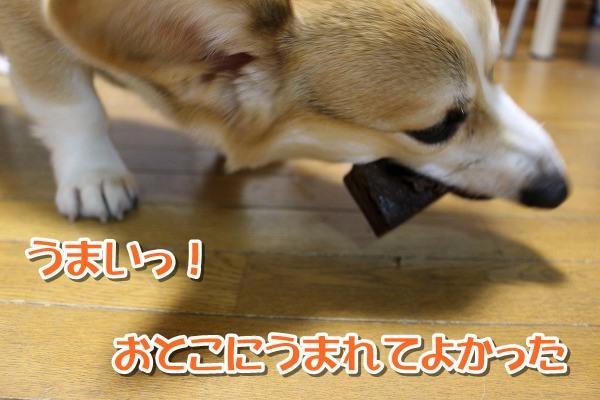 IMG_0414-0.jpg