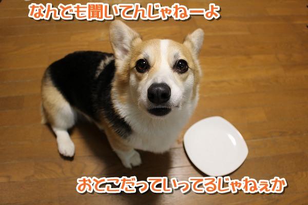 IMG_0419-0.jpg