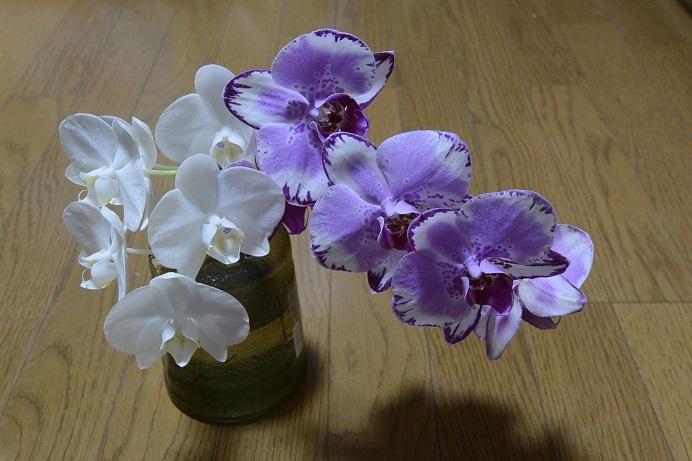 胡蝶蘭切花2種
