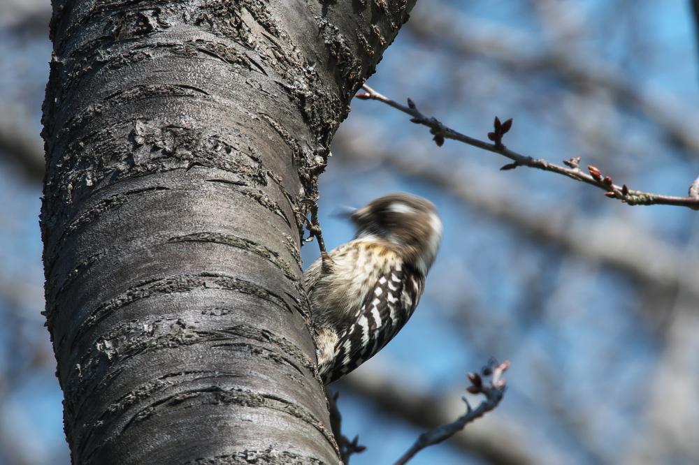 野鳥 (2)