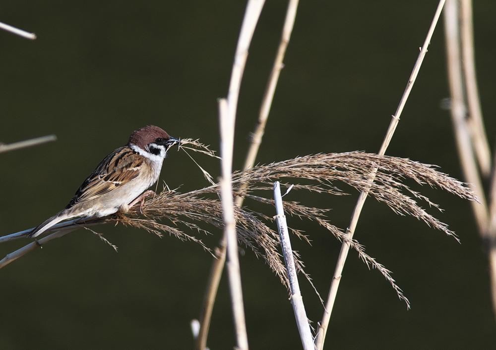 野鳥 (3)
