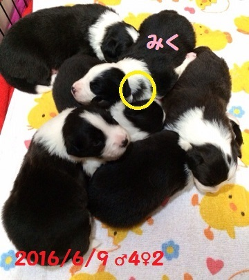 201606241650291b4[1]