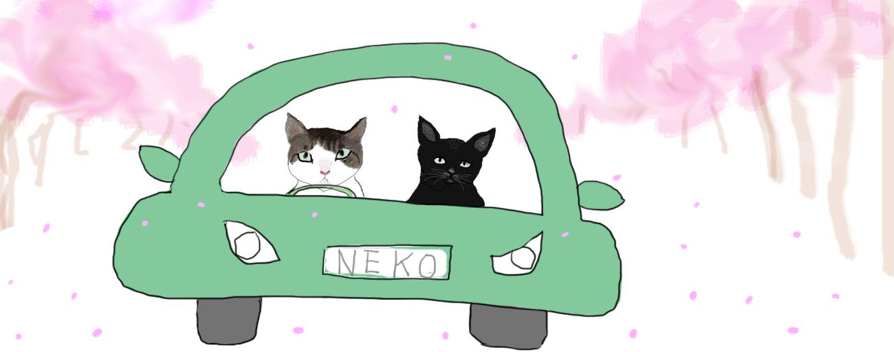 猫のドライブ