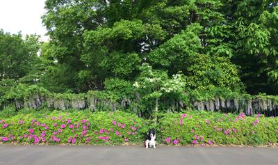 緑の散歩コース