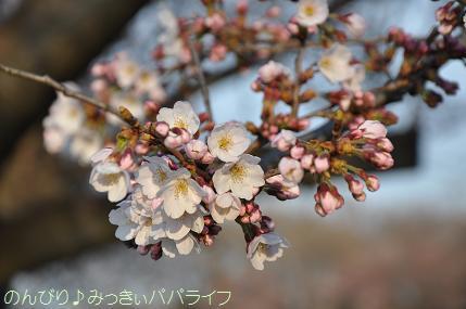 earlysakura06.jpg