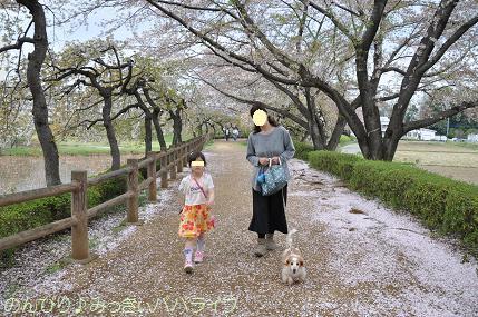 latesakura19.jpg