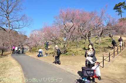 shinrinkoenbairin201722.jpg