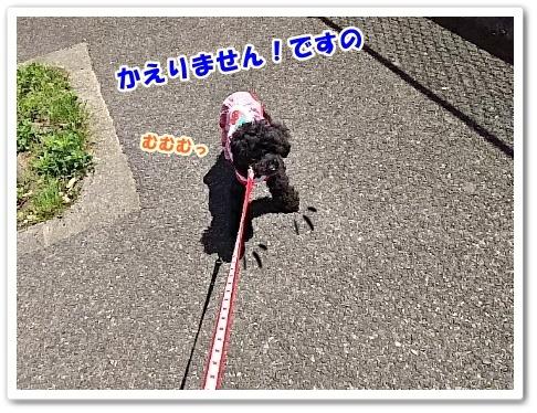 DSC_3851 (450x338)