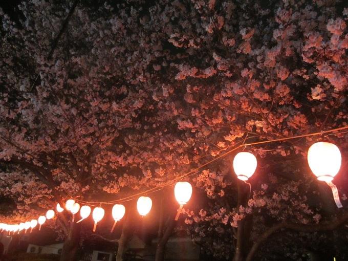 西公園桜2