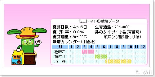 ペット栽培III(ミニトマト)02