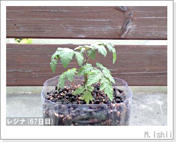 ペット栽培II(レジナ)19