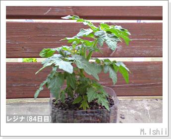 ペット栽培II(レジナ)22